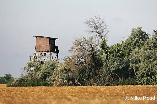 C21D0181-Tower-hide-Hungary-Copyright-Mike-Read_tn